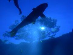 blue_underwater_fish_118469_m.jpg