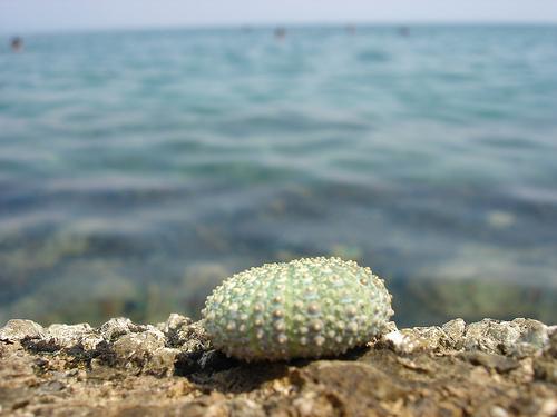 croatia shell