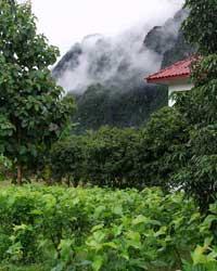 Laos Organic Farm