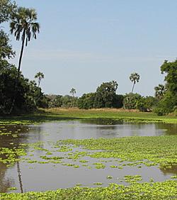 gorongosa2-mozambique