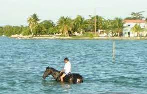 Horse Bay