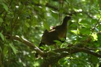 Quinta Mazatlan Bird