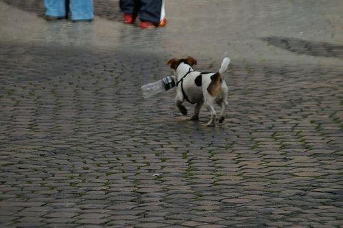 dogwithbottle