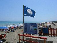blueflag