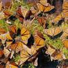 20061030_monarchs.jpg