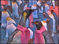 _42217206_penguins01-203.jpg