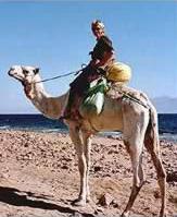 cameltrek.jpg