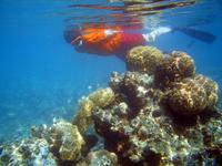 reef_snorkeler.jpg