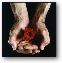 roseshad.jpg