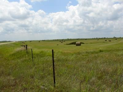 Grasses and hayfield, Flint Hills region, Kansas (Scarborough photo)