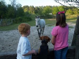 South Carolina horse greets kids (courtesy hdport at Flickr CC)