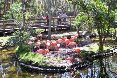 Flamingo section of Homosassa Springs Wildlife State Park, Florida (photo by Sheila Scarborough)