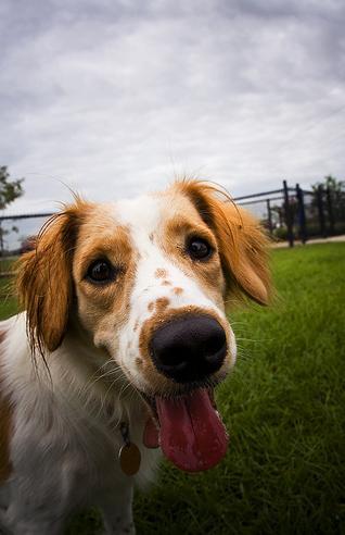 happy-dog-on-flickr-photo-sharing_1242940411368