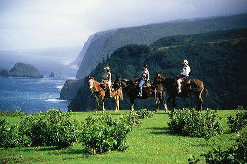 horsebackhawaii.jpg