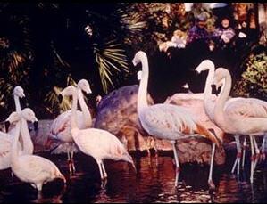 wildlife-habitat1