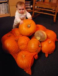 Pumpkin harvest with munchkin and turnip