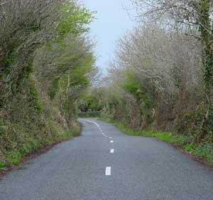 Irish road passing beneath trees