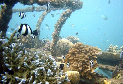 mini-bali-coral-reef.jpg