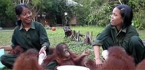 mini-orangutan-rescue-workers.jpg