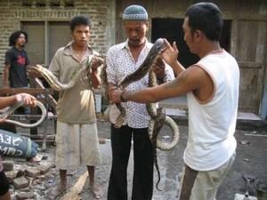 mini-snake-conservation.jpg