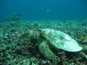 mini-turtle2.jpg