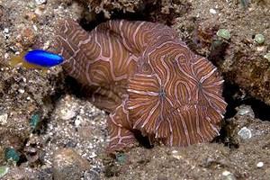 mini-crawling-fish1.jpg