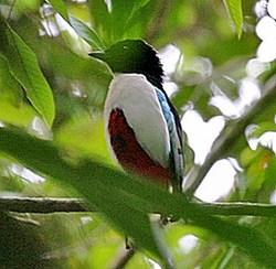 mini-fairy-bird.jpg