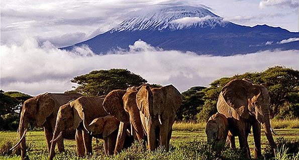 Kilimanjaro From Ambroseli