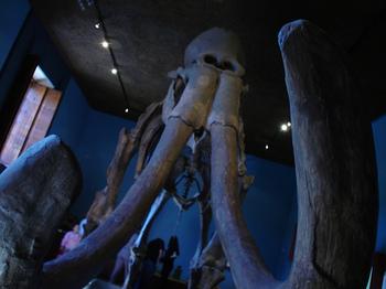 rsz_museo_regional_de_gdl_1_by_donarturo