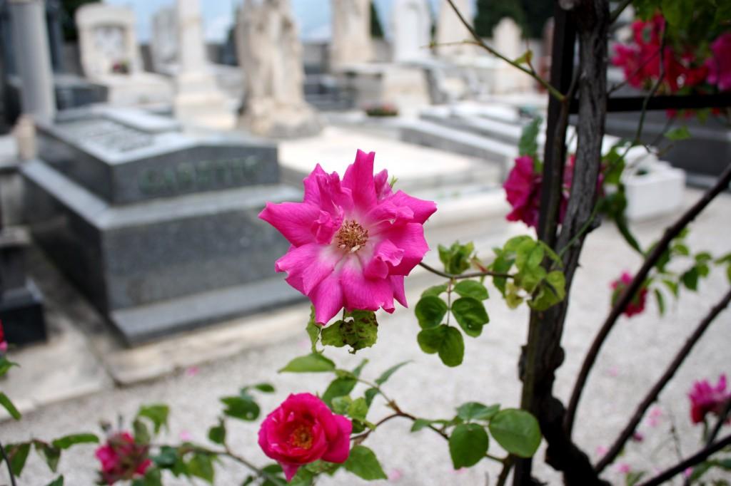 Cemeteries in Nice France