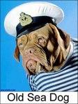 old_sea_dog1.jpg