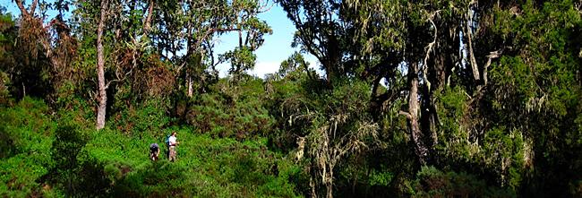 lemosho-forest