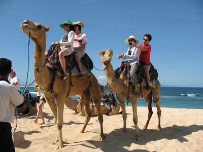 mini-camel-action1a1