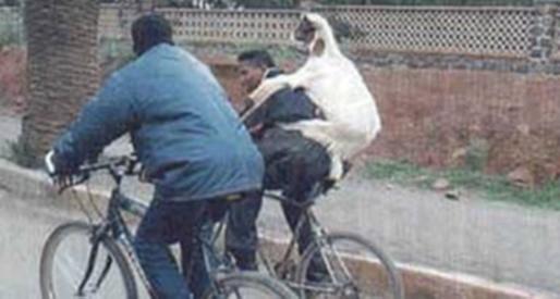 Livestock Transit
