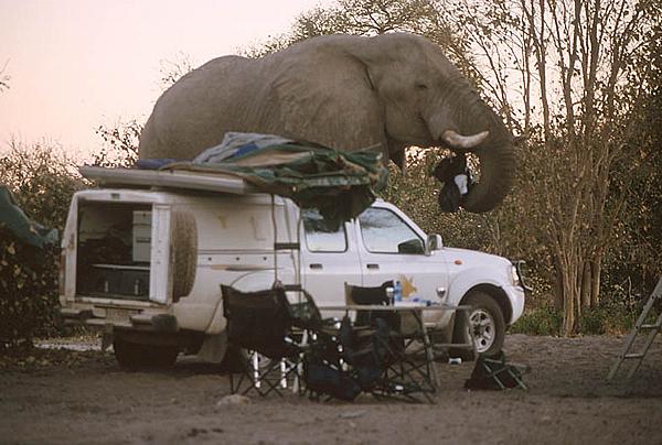 Elephant 11