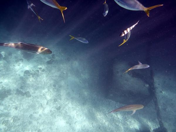 fish in light streams