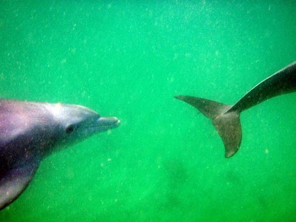 split dolphin