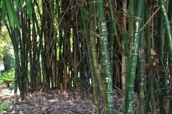 perth bamboo