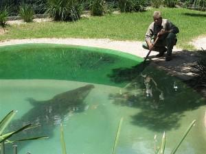 sydney reptile park giant croc