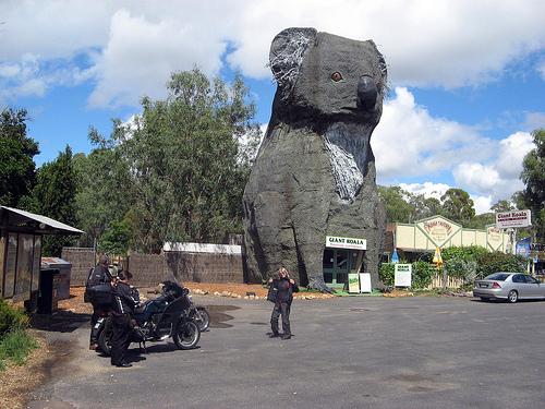 giant koala dadswells bridge